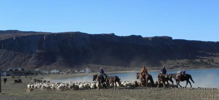 Arreo Mapuche (4)
